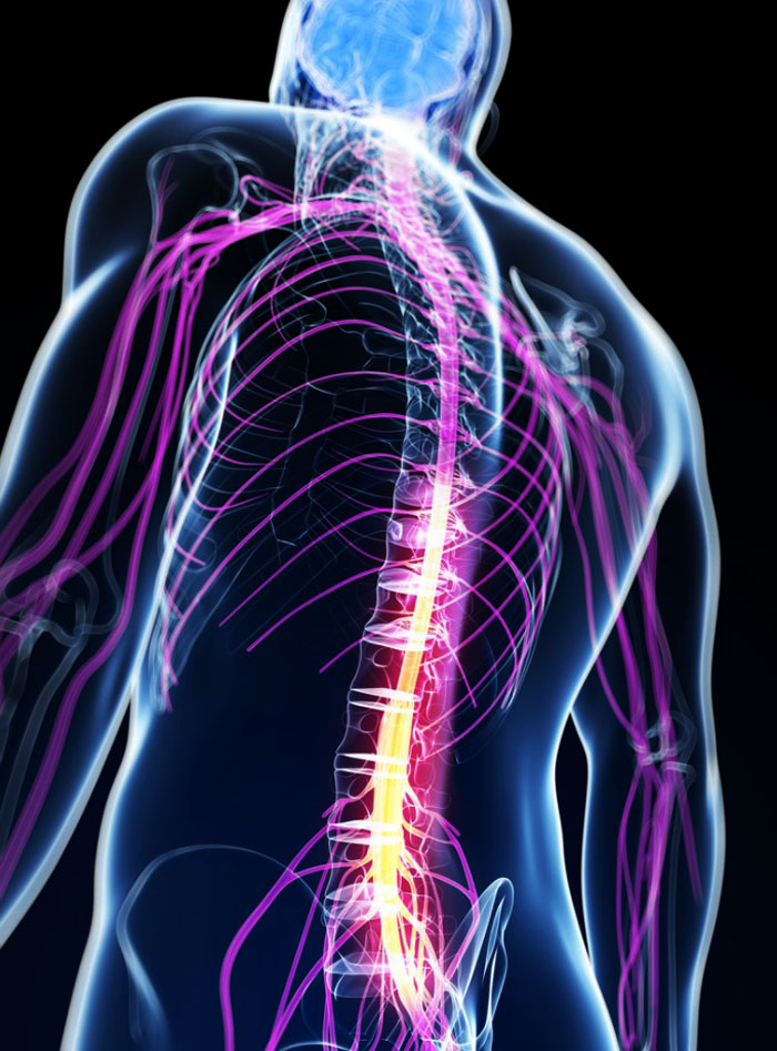 11860 Vista Del Sol, Ste. 128 Chiropractic Improves Circulation That Can Help Increase Productivity